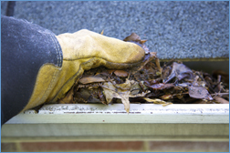 Leaf Removal from Gutters